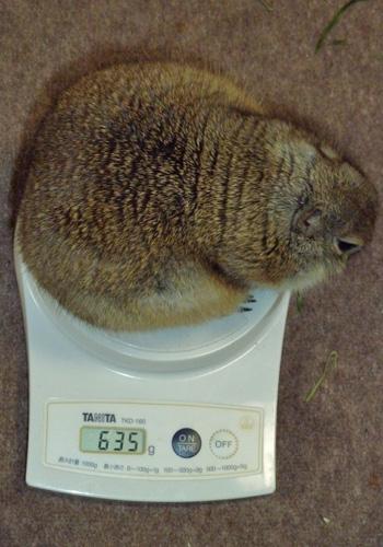 20110305のぴいちゃん体重