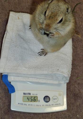 20110305きゅうちゃんの体重