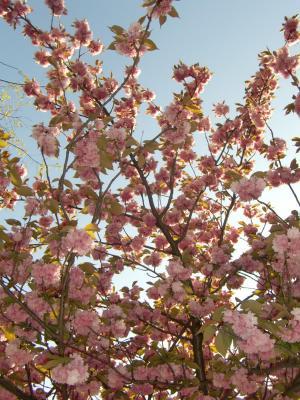 le printemps2