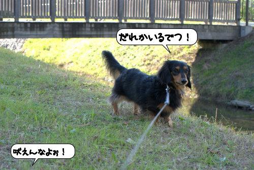 a_20121109110219.jpg