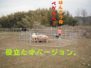 DSCF4127.jpg