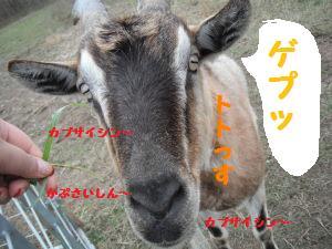DSCF4159.jpg