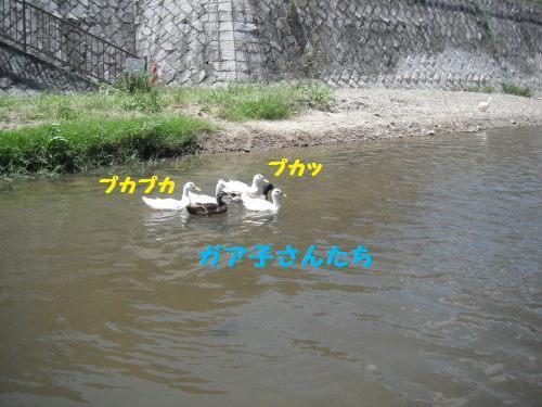 DSCF6512.jpg