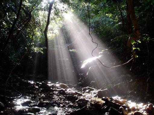大保の森2