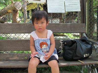 チェンマイ タイガーキングダムでトラ体験♪その2