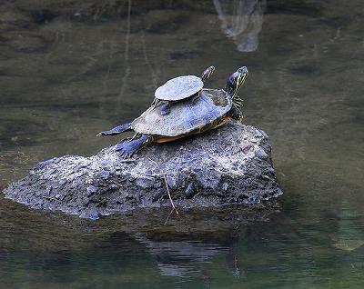 親亀の上に小亀