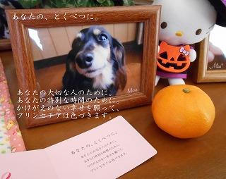 2013-11-24-21.jpg