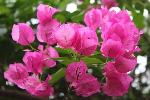 花と昆虫館