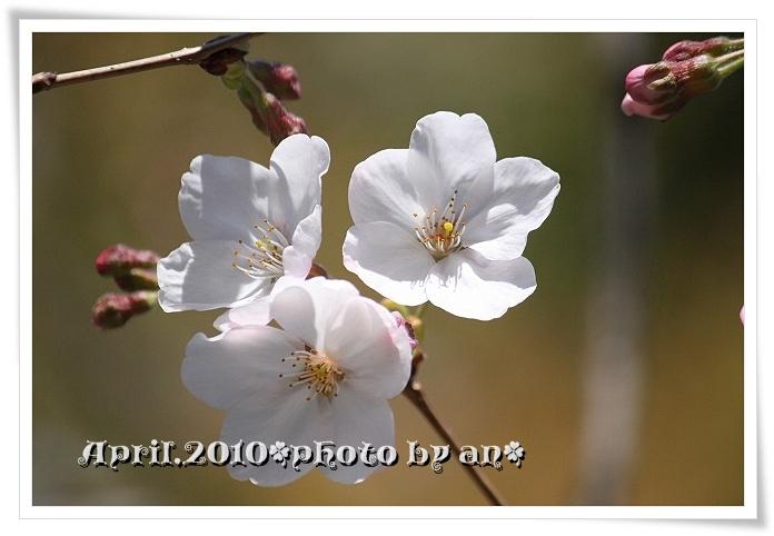 20100329_8244.jpg