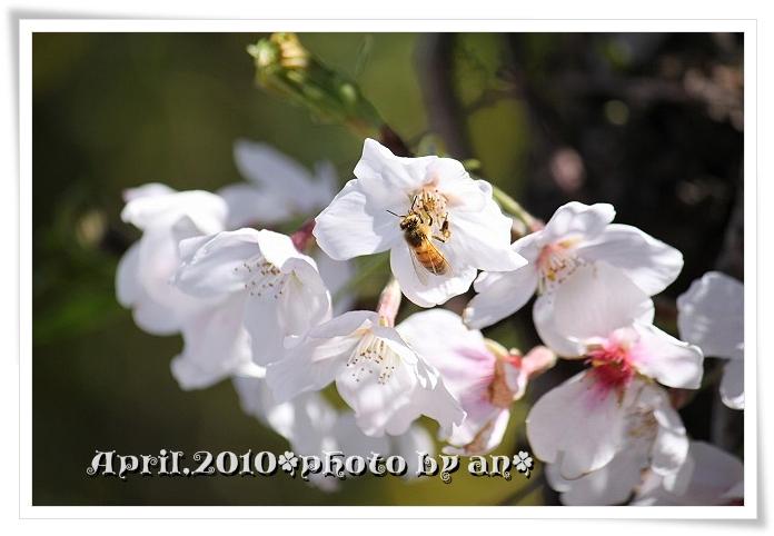 20100329_8388.jpg