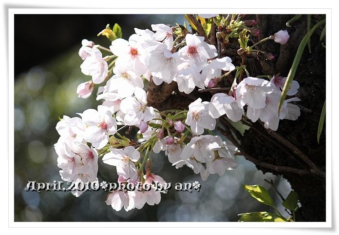 20100329_8393.jpg