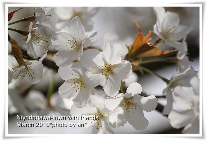 20100330_9257.jpg