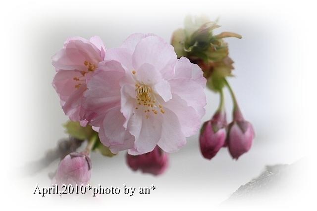 201003_9931.jpg