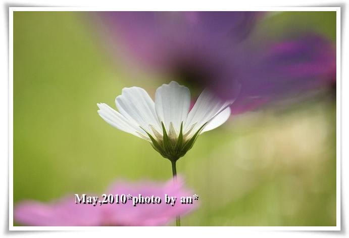 20100502_5731.jpg