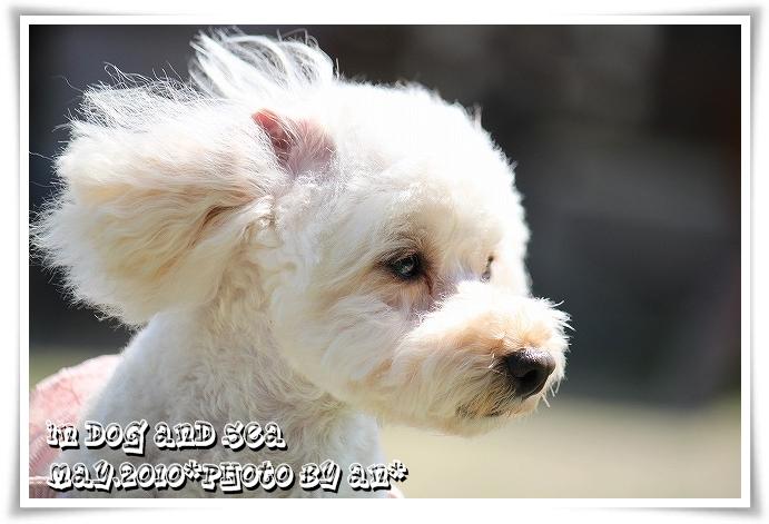 20100517_8181.jpg
