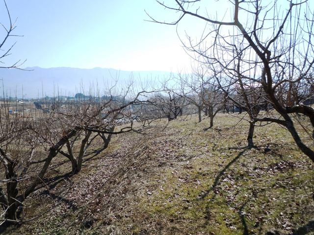 松岡古城 (5)