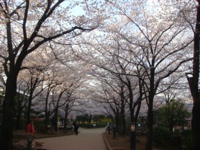 20120406sakura2.jpg