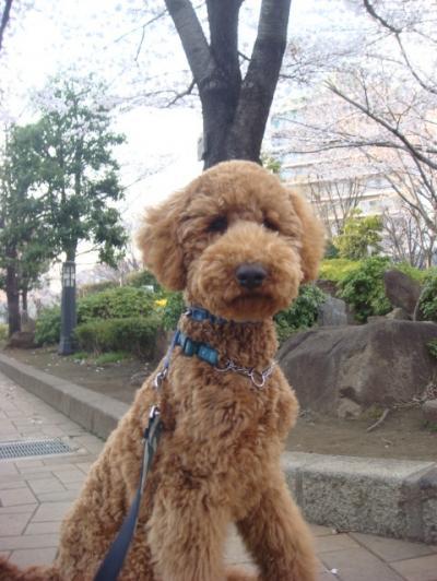 20120406sakura4.jpg