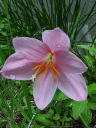 20120611花