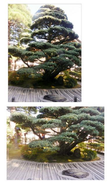 蠎ュ蝨偵・譚セ_convert_20141112095359