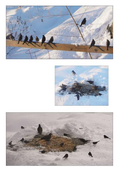 ローカルの鳥達