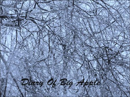 12月9日樹氷