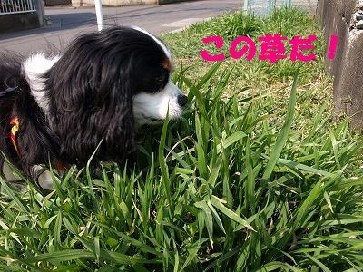 草を見つけると2