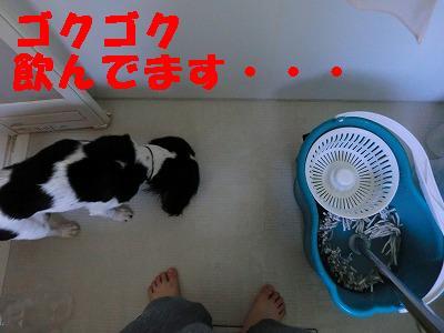 CIMG07080.jpg