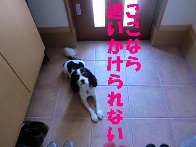 CIMG0715.jpg