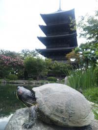 東寺とカメ