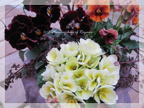 バラ咲きジュリアン マスカットのジュレ