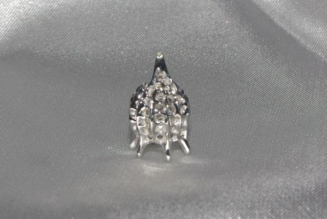 Calocyclas virginis Haeckel