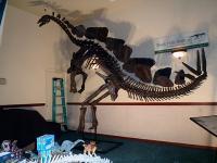 ツーソン ステゴサウルス