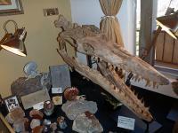 ツーソン 海生爬虫類