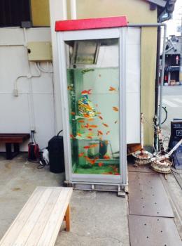 金魚電話BOX②