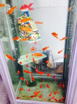 金魚電話BOX①