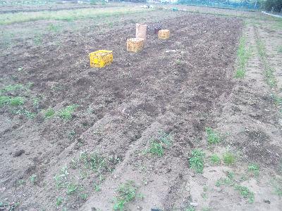 ジャガイモを掘り終わったと2011