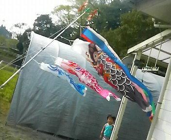 鯉のぼり完成~1