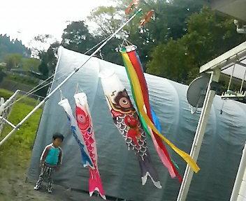 鯉のぼり完成~2