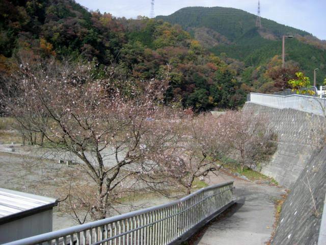 丹沢湖01