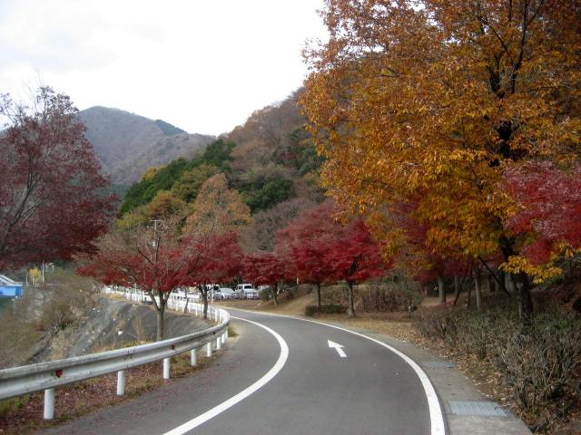 丹沢湖11