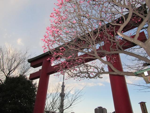 亀戸天神+001_convert_20120227230519