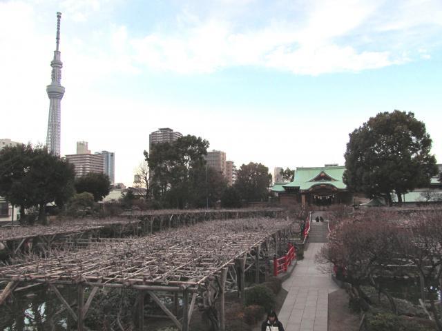 亀戸天神+009_convert_20120227233718