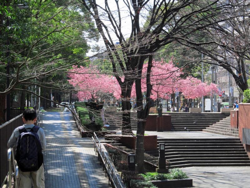 おかめ桜+001_convert_20120329192035
