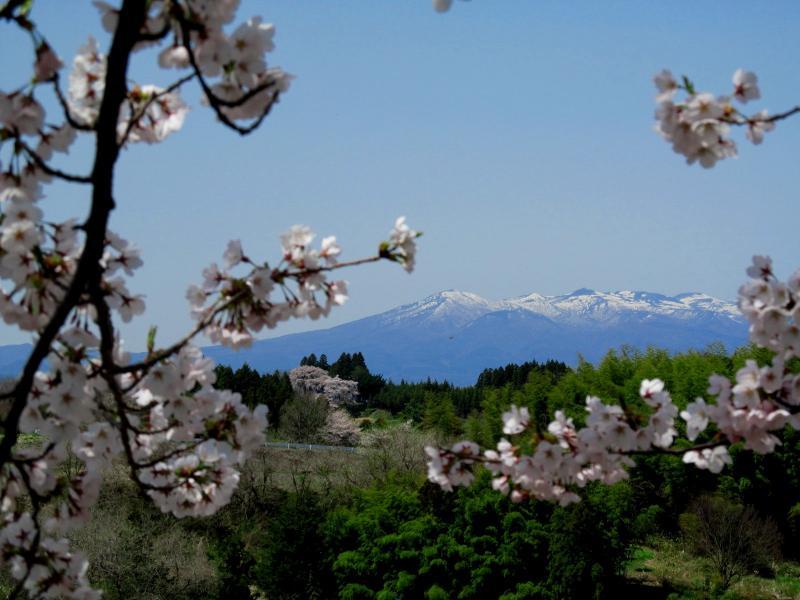 三春滝桜09丘の上02_convert_20120430125721