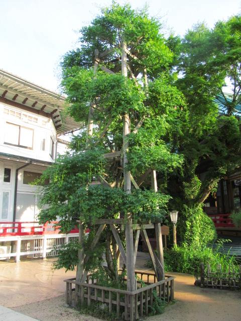 06富士屋ホテル06