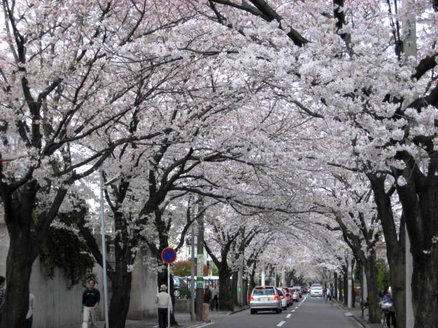 01 Tunnel de cerisier