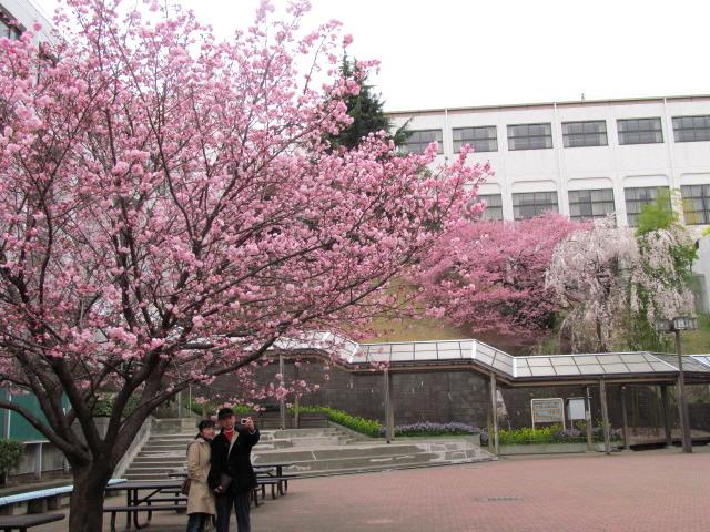 03国学院桜 153