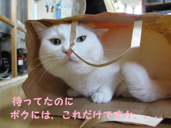 おみやげ~2