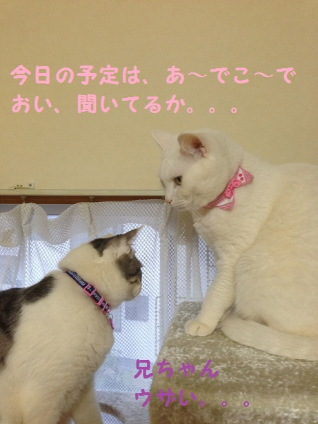ネコ会議3